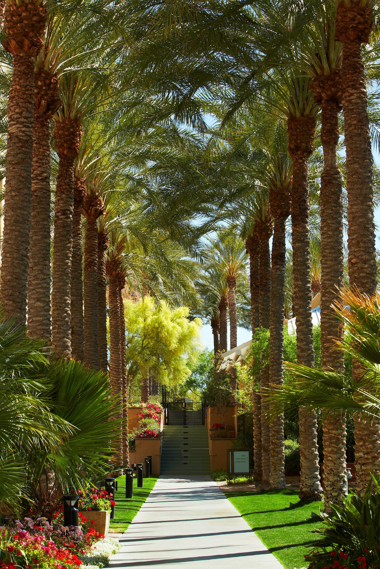 path through phoenix resort with palm trees
